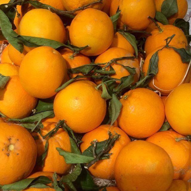 Cenergien bedstejulemad appelsiiiin vildmeddem