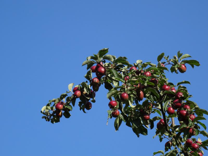 BeautyBlog-æblegren-blå-himmel