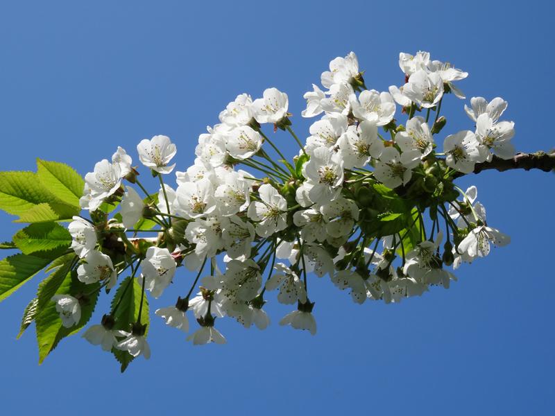 BeautyBlog-morelgren-med-blomster