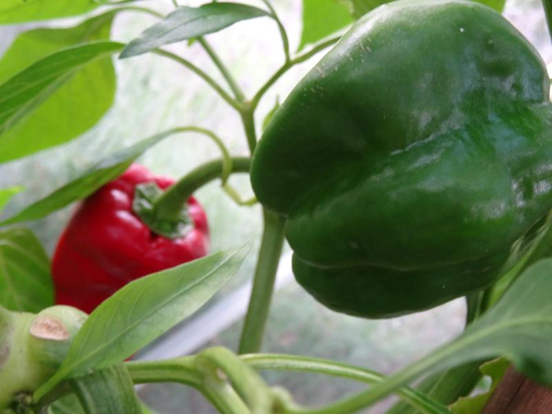 BeautyBlog-rød-grøn-chili